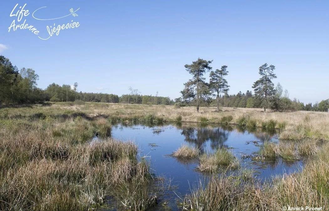 Hautes-Fagnes | La restauration des landes et tourbières de Wallonie