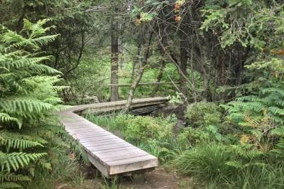 Le petit pont sur le ru d'Herbofaye
