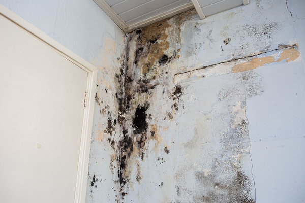 Black mold in the corner of a room.