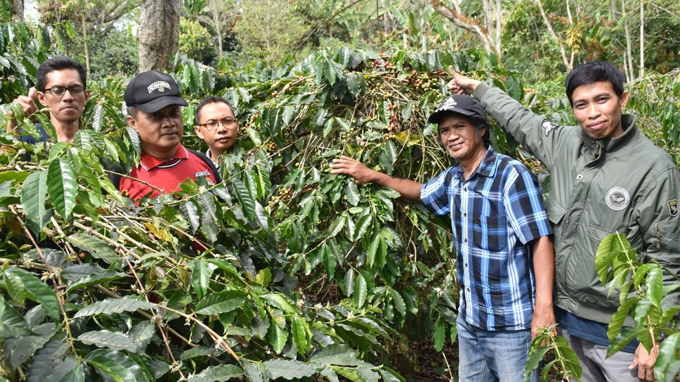Petani Enrekang Manfaatkan Limbah Kulit Kopi sebagai Pupuk Organik