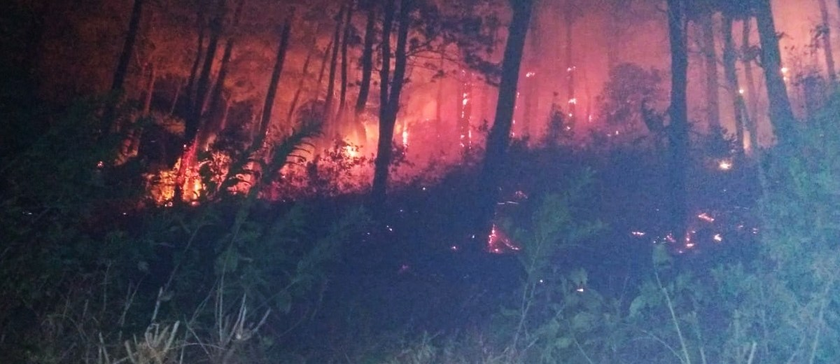 Gubernur Instruksikan Tangkap Pelaku Pembakaran Hutan