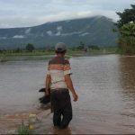 Tananam Padi Petani Luwu Timur Terancam Rusak Akibat Banjir