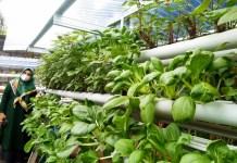 Naoemi Octarina Dorong Gerakan Sayur Bebas Pestisida