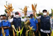 Gubernur Gandeng Perseroda-Bank Sulselrabar Atasi Persoalan Petani Sulsel