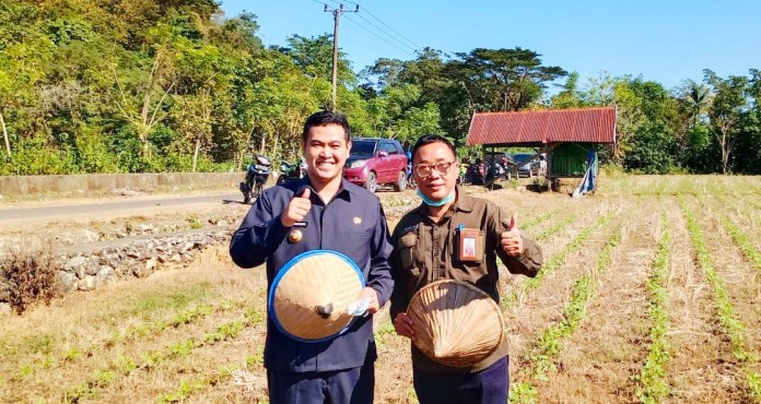 Kadis Pertanian Sulsel Tanam Kacang Ijo bersama Bupati Pangkep