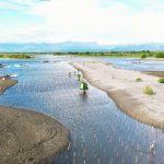 Warga Bersemangat Tanam Mangrove, Wujud Nyata Perbaikan Hilir Sungai Saddang
