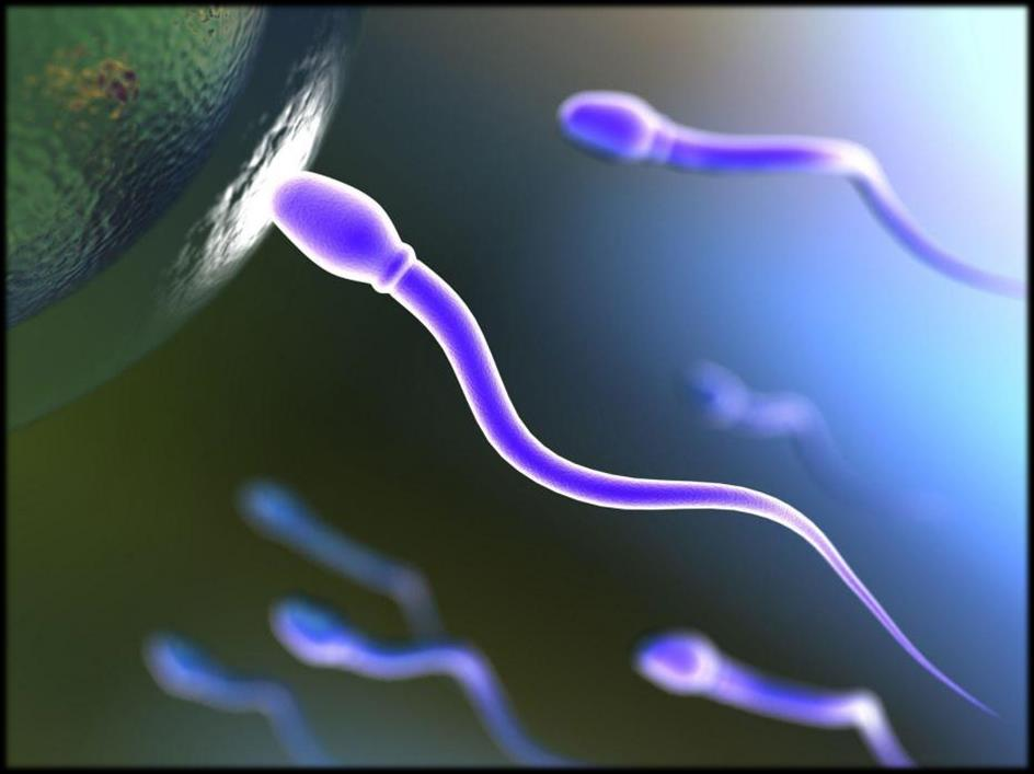 Bad Antibodies in sperm