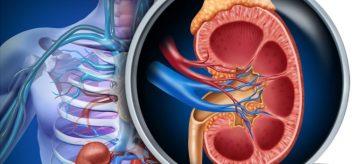 Néphropathies héréditaires - Actualités Médicales Quotidienne
