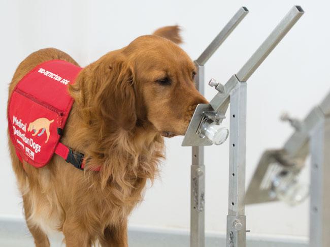 Image result for cancer detection dog
