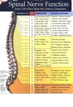 SpinalNerveFunctionjpg_Page1  Medical eStudy