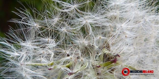 Allergies Pollen