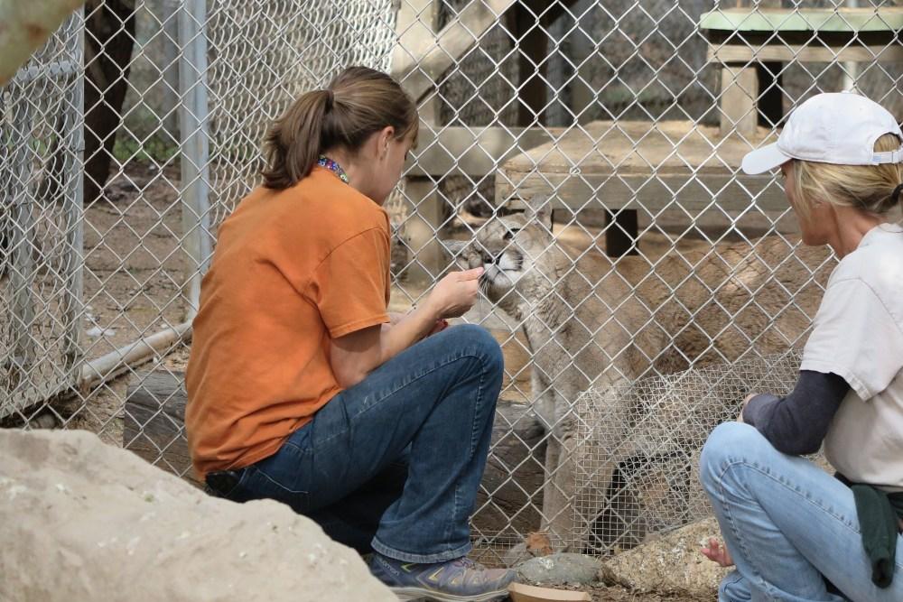 rescue animals CBD