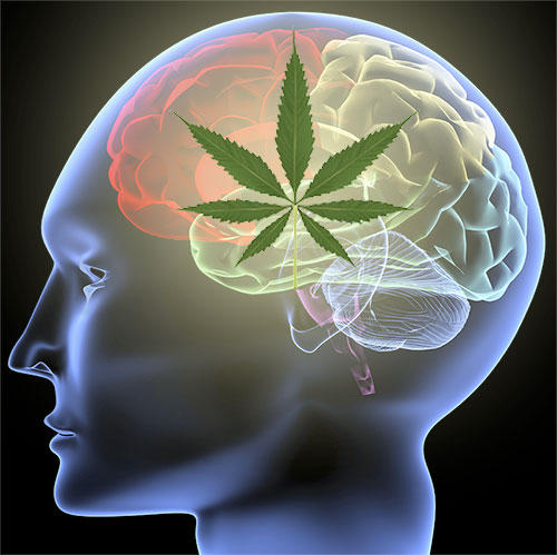 Cannabis for Parkinsons | Southern Arizona Integrated ...