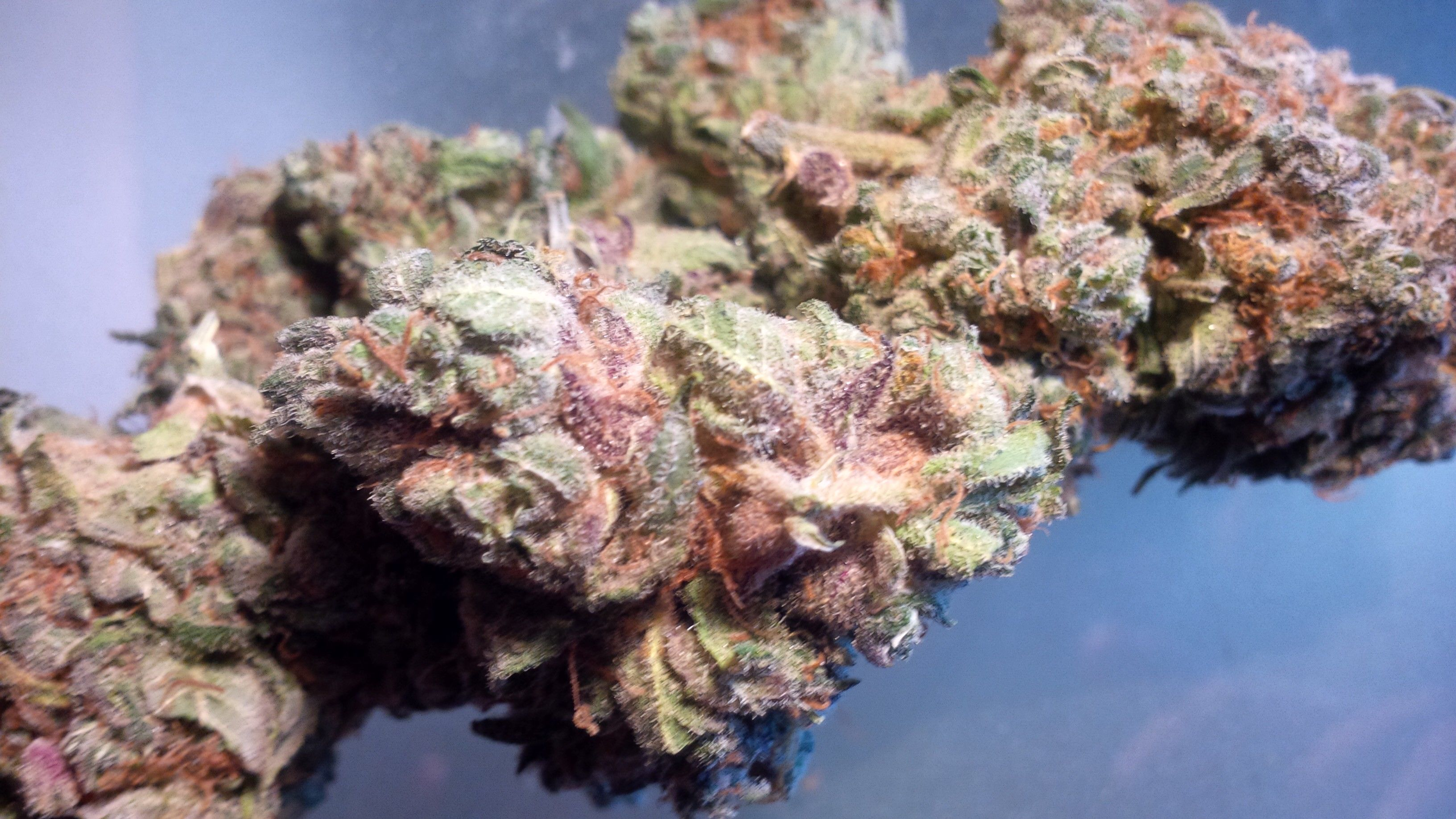Image result for Lucky Charms Cannabis