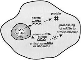 Oligonucleotide Mechanism Image