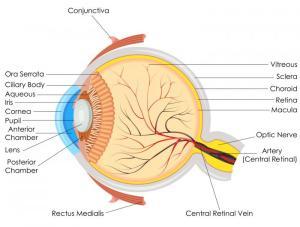 Detached retina: Symptoms, causes, and treatment  Medical