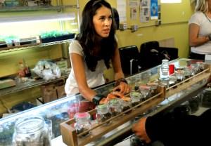 Dr-Reefer-marijuana-dispensary-pop_9067
