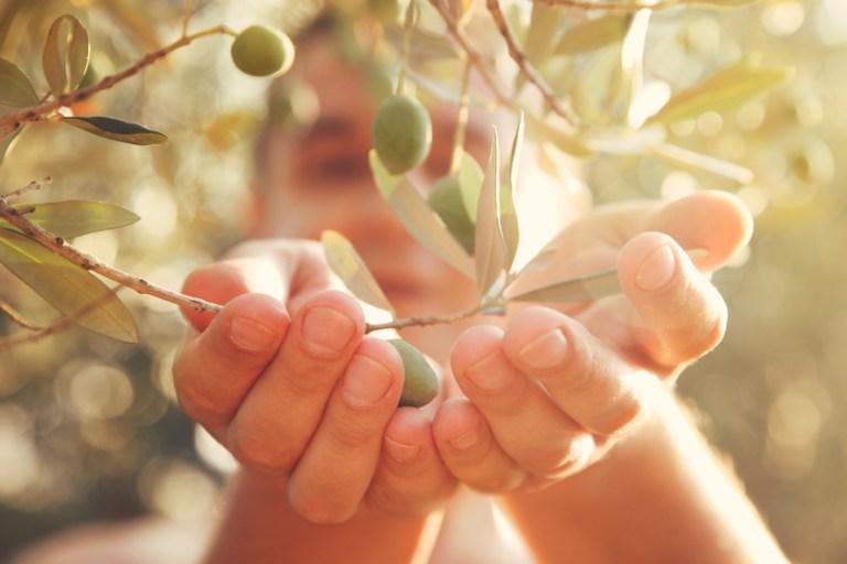 L'huile d'olive et ses effets contre le vieillissement