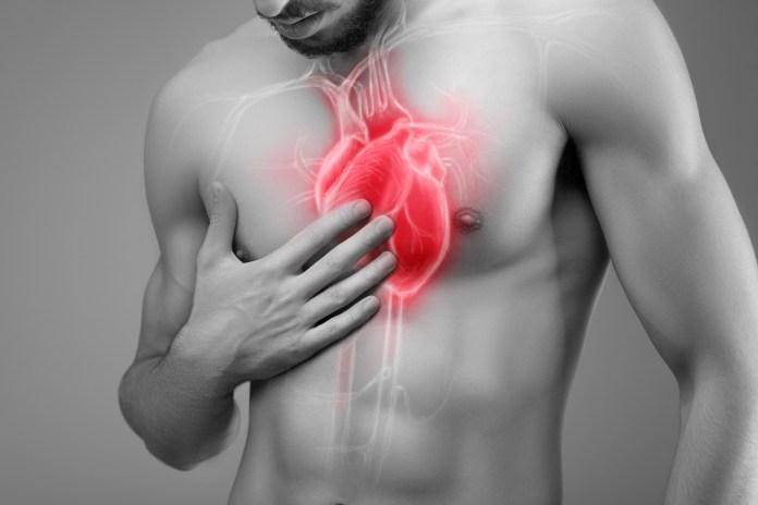 L'huile d'olive protège votre système cardiovasculaire