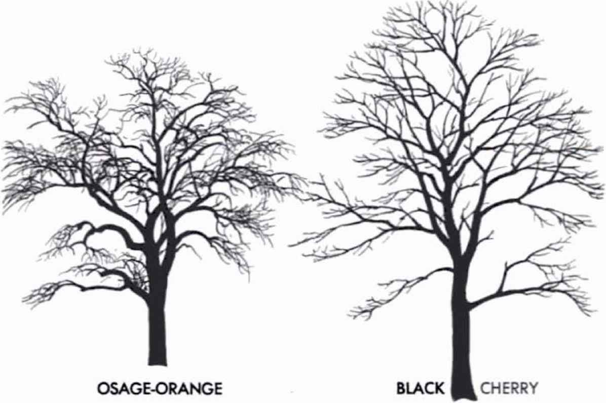 Tree Silhouette Clipart Download