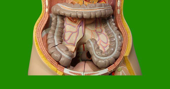 Cáncer de colon: todo lo que necesita saber