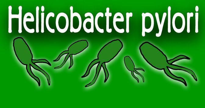 Helicobacter pylori - Toda la información en la Medicinapedia