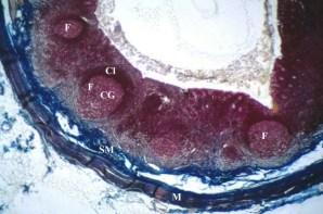 Risultati immagini per appendice
