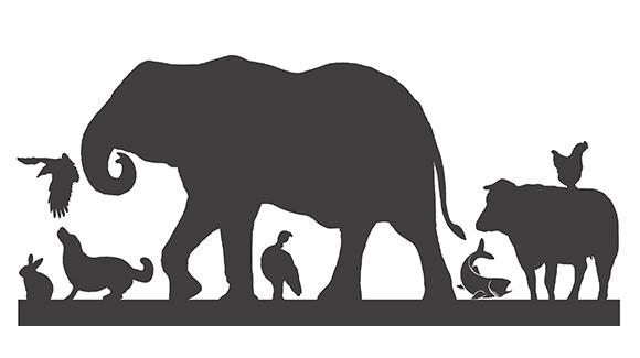 Pietà nel mondo animale : esiste?