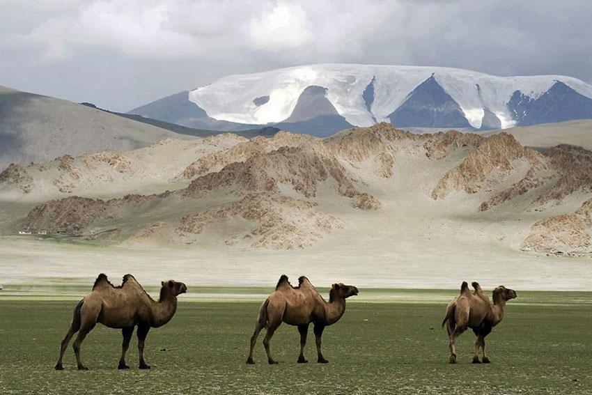 Morbillo in Mongolia:  per l'OMS free dal 2014. E negli ultimi 2 anni 50.000 casi con il 99% di copertura. Qualcosa non torna?