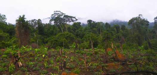 Ogni anno viene distrutta una foresta grande quanto l'Italia