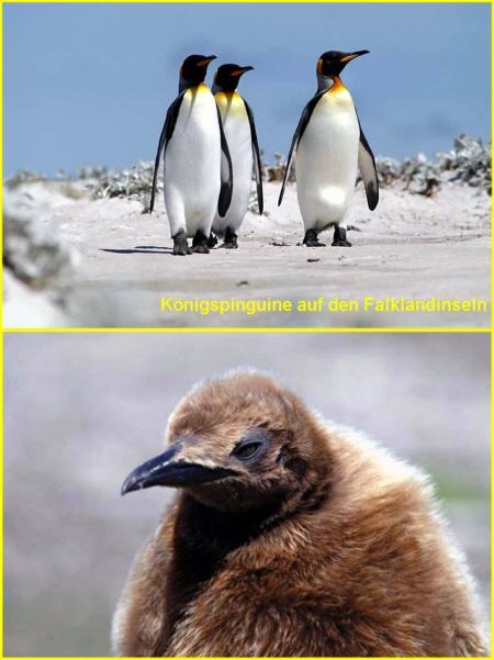 Allgemeines Ber Pinguine Medienwerkstatt Wissen