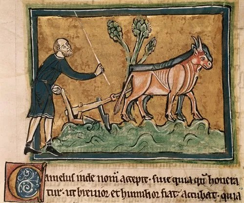 Detail of a miniature of a man ploughing with oxen - photo courtesy British Library