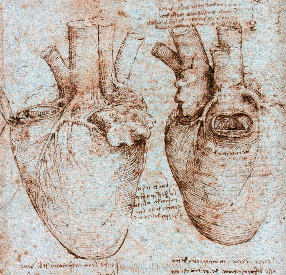 Leonardo da vinci anatomy sketches