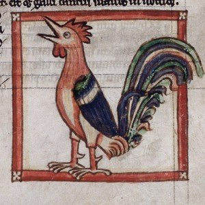 rooster - British Library