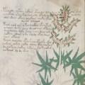 Voynich Manuscript partially decoded, text is not a hoax, scholar finds