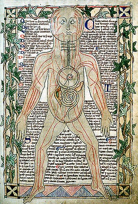 13th_century_anatomical - medicine
