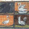 Knightly Bird Vows: A Case Study in Late Medieval Courtly Culture