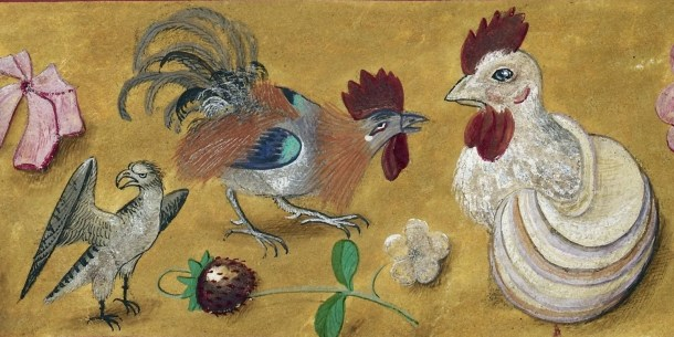 Chickens in the Middle Ages