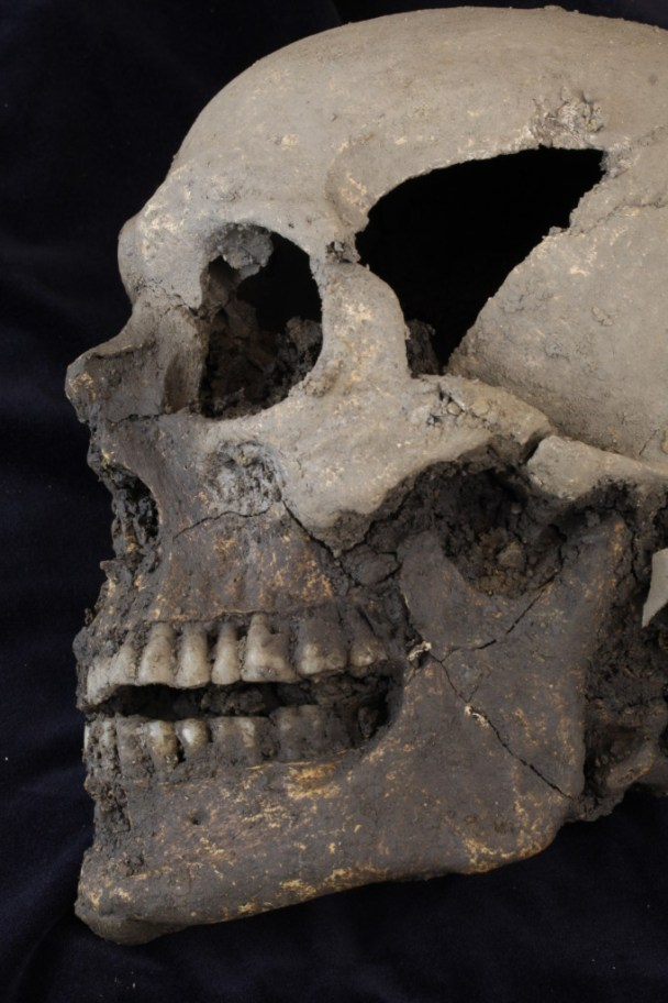 Skull - Photo: Rubicon Heritage Services
