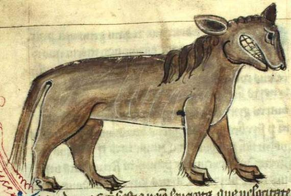 A Crocotta, as portrayed in the Aberdeen Bestiary