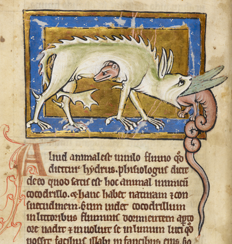 Hydrus in British Library MS Royal 12 C XIX   f. 12v