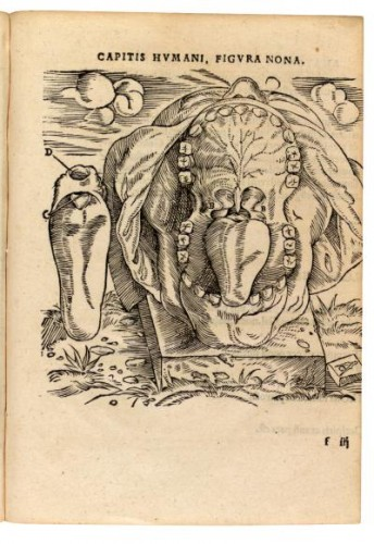Dissection of the mouth from 1537