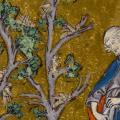 Medieval Pest Control