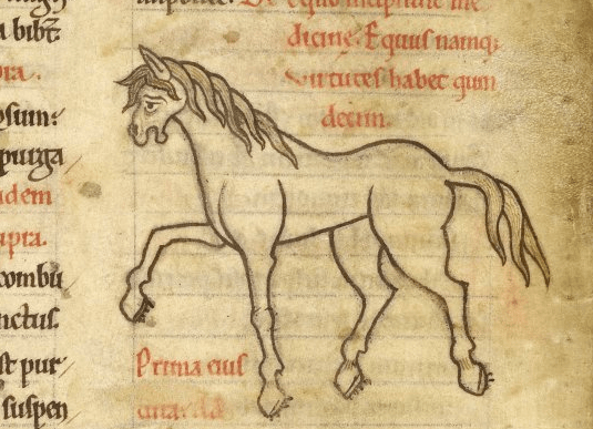 Horse depicted in British Library MS Harley 1585 f. 69v