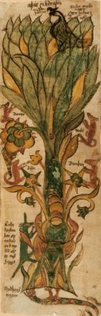 The ash­tree Yggdrasil from a XVII­century Icelandic manuscript.