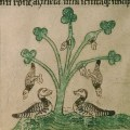The Associative Branches of the Irish Barnacle: Gerald of Wales and the Natural World