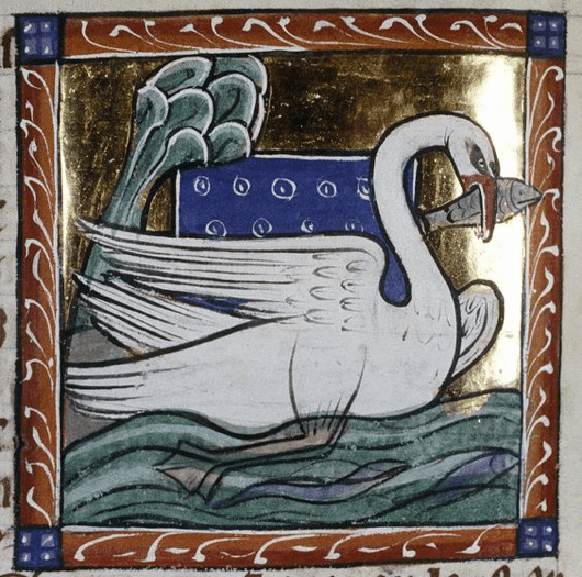 Swan from Bodleian Library, MS. Bodley 764, Folio 65v.