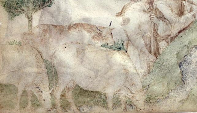 The Macclesfield Cattle Enterprise of Edward the Black Prince, and why it failed, 1354 to 1376