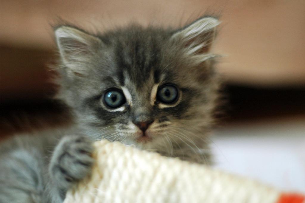 The Kitten that Nearly Killed King Arthur