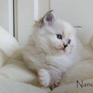 nanou_5
